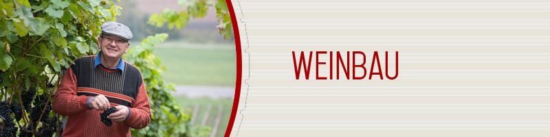 Weinbau in Ziegelanger